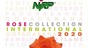 Cut Rose Collection INTERNATIONAL 2020