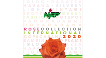 Catalogue Cut Roses 2020 INTERNATIONAL