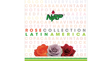 Cut Rose Collection 2020 LATIN AMERICA